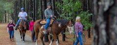 header-riding-horses.jpg